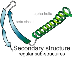 Secondary Protein Structures